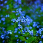 flower_june