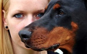human&dog