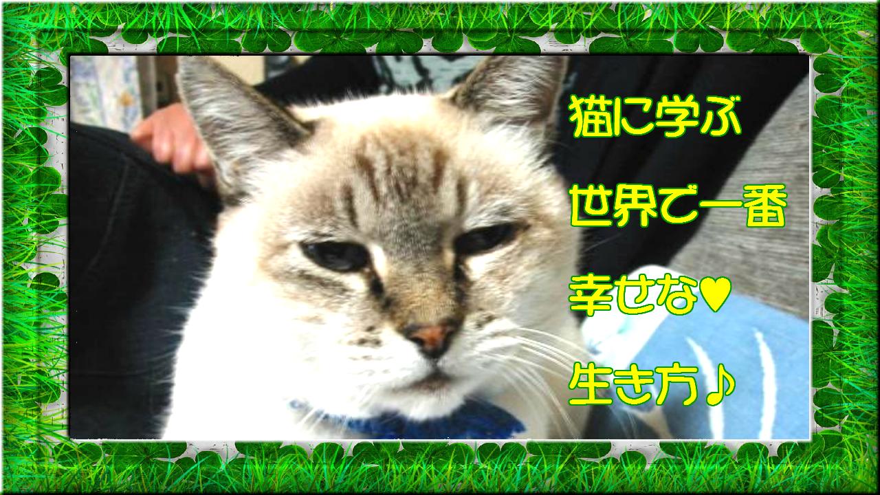 ネコに学ぶ【世界で一番幸せな生き方】