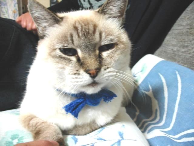 my_dearest_cat_2004-10-26-color
